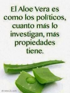 aloe vera como políticos